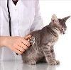 Ветеринарные клиники в Атяшево